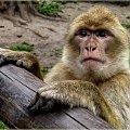 zwierzaczki ... :) **** ulub. amyw **** #zoo #zwierzęta