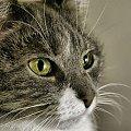 Tequila #Tequila #cat #kot #kotka #zwierzę