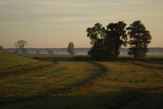 nadodrzańskie pola
