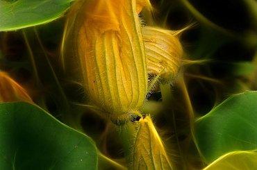 wspomnienie lata #kwaity #rośliny #fraktale