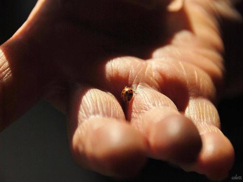 #biedronki #owady #przyroda #zwierzęta