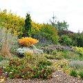 Ogród w Radkowie jesienią #grochowscy #ogród #radków #szkółka