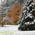 Barwy jesieni, autumn, colours #autumn #barwy #colours #drzewa #jesien #jesień #trees