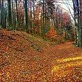 karkonoska jesień #jesien #las #góry