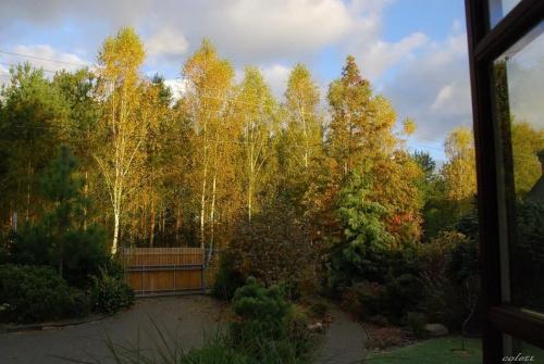jesień za oknem... #jesień #ogród #przyroda