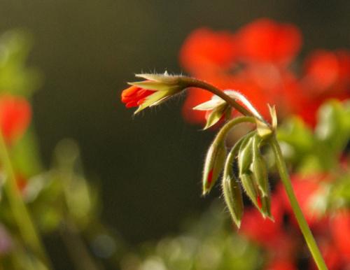 moja balkonowa jesień :)) **** ulub. ania-nozka ****