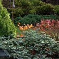 #jesień #kolory #przyroda