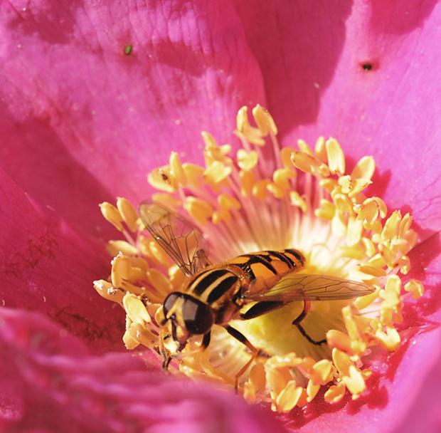 #owady #kwiaty #natura #Jesien2012
