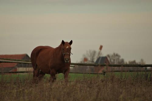 #jesień #konie #zwierzęta
