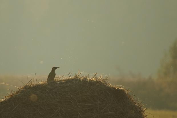 #dzięcioł #jesień #ptaki