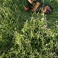 #rottka #rottweiler #adopcje #fundacja #DoAdopcji
