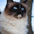 Lilly... #arietiss #fauna #kot #plener #portret #zwierzęta