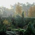 kolory, kolory... #jesień #kolory #listopad #ogród