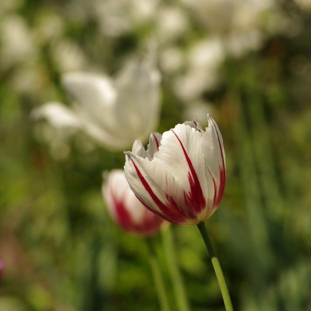 a to kwiatek.. dla Polski :)