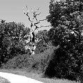 #Krajobraz #widok #woda #GrahamWater #drzewo #droga