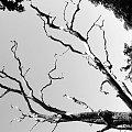 #Krajobraz #widok #woda #GrahamWater #drzewo