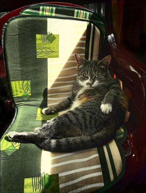 Kot na wczasach #zwierzęta #koty