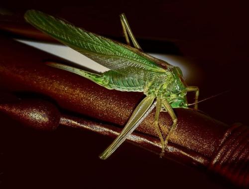 nocny gość #owady #przyroda