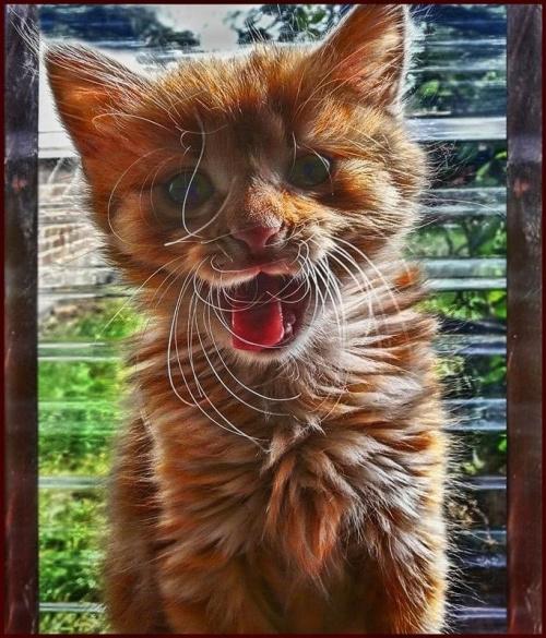wibrysy=wąsy #koty #zwierzaki