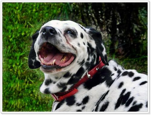 uśmiech dla Jovanki #psy #zwierzęta
