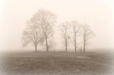 Mgła ... #mgła #drzewa