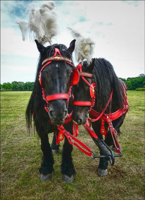 #zwierzeta #konie