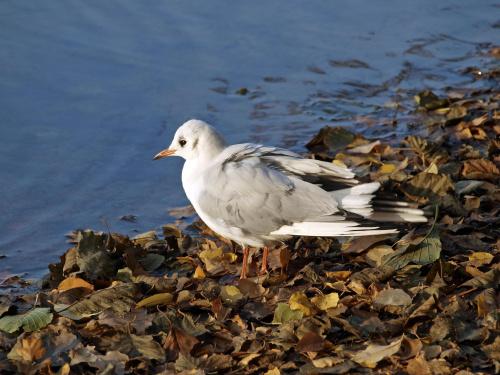 #ptaki #jezioro #zwierzeta #przyroda