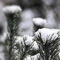 ... #biel #ogród #przyroda #zima