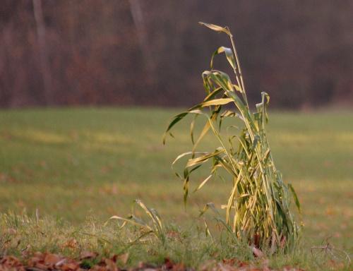 wyjeżdżam na kilka dni i nie wiem, czy będę miała dostęp do neta ... pozdrawiam i życzę pięknej pogody ... :)) #jesień #trawy #pola #łąka #park