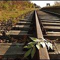 #jesień #liście #Lubsko #tory
