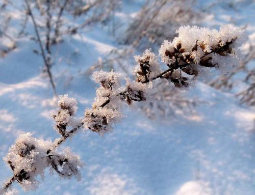 Świat w uroczystym śpi skupieniu. Śnieg drobnym pyłem srebra prószy. Słuchajmy w ciszy i milczeniu mistycznych pieśni naszej duszy. /Julian Tuwim/ #mróz #pola #szadź #śnieg #zima