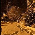 ... nad ranem #grudzień #ogród #przyroda #zima