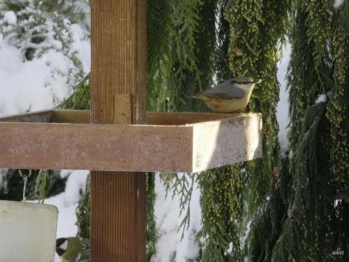 Pan Kowalik #grudzień #ogród #przyroda #zima