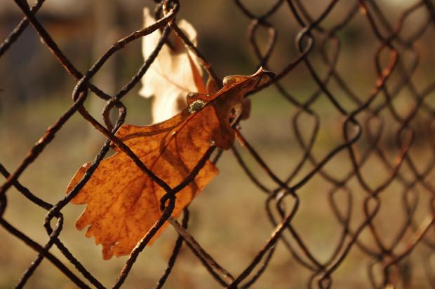 #jesień #listopad #liście