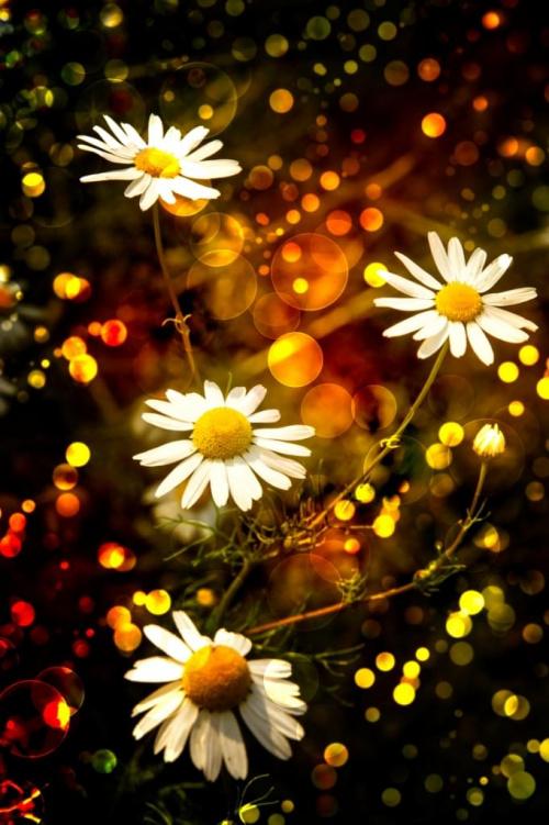 Wszytskim życzę aby Nowy Rok przyniósł wiele pięknych chwil,radość i niech się spełnią najskrytrze marzenia!!! :)