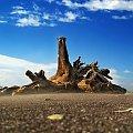 Drzewo wyrzucone na plaze #chmury #gory #ocean #poranek #przyroda #woda #WschodSlonca