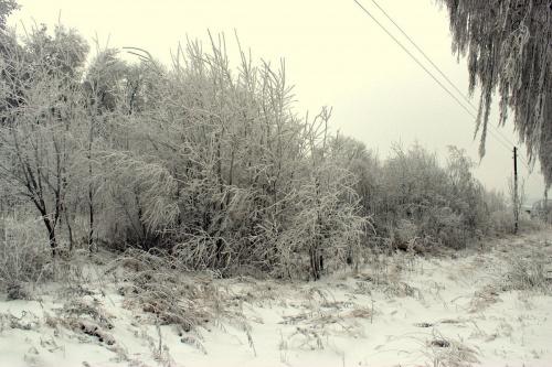 styczeń mroźny i biały zwiastuje upały ... #drzewa #szadź #śnieg #zaspy #zima