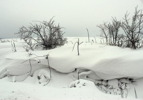 styczeń mroźny i biały zwiastuje upały ... **** ulub. ewawardzala **** #drzewa #szadź #śnieg #zaspy #zima