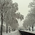 styczeń mroźny i biały zwiastuje upały ... **** ulub. giga-grzmot **** #drzewa #szadź #śnieg #zaspy #zima