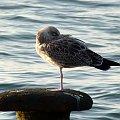 tak sobie wspominam letni czas ... :)) #Rewal #lato #wakacje #urlop #morze #Bałtyk #plaża #mewa #ptaki