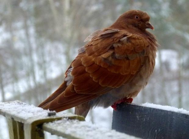 taka zima była dzisiaj u mnie do południa ... **** ulub. amyw **** #ZaOknem #zima