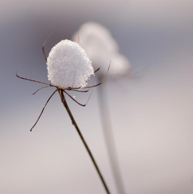 #natura #śnieg #zima