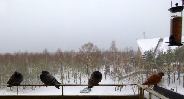 taka zima była dzisiaj u mnie do południa ... #ZaOknem #zima