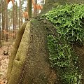 ... w lesie #las #luty