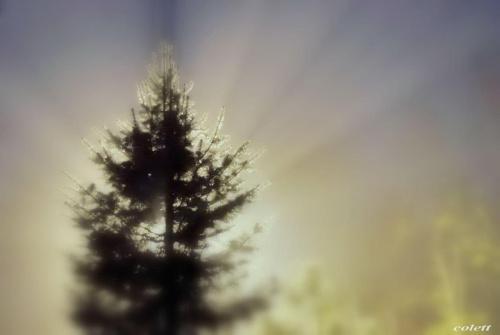 wieczór...opada mgła #przyroda #wieczór #zima