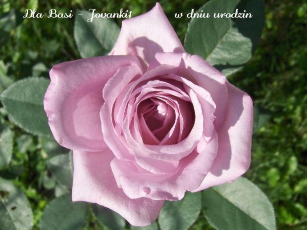 Najlepsze życzenia urodzinowe, samych szczęśliwych dni, wielu powodów do radości, dużo, dużo miłości.