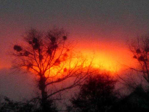Płonące niebo i jemioły. #krajobraz