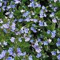 dla odmiany, troszkę szufladowych ... :)) #kwiaty #lato #ogród #chwasty