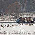 #zima #pole #sarny #zwierzęta