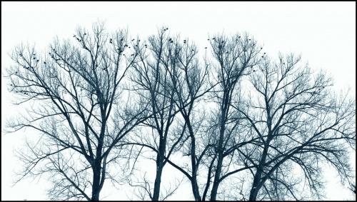 Ptaki na drzewach